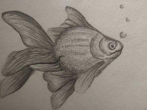 Sketchy Things Fish
