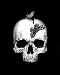 Skull And Soul On Black