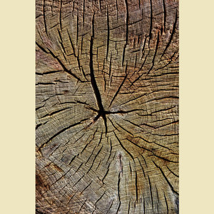 Wooden Bark Print 2