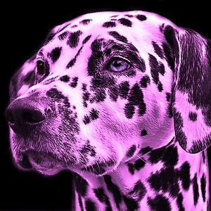 Colorful Purple Dog Pet