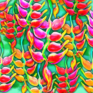 Exotic Flowers Heliconia Pendula