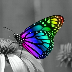 Colorful Butterfly On Grayscale