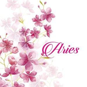 Aries On Cherry Blossom