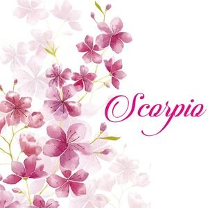 Scorpio On Cherry Blossom