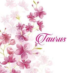 Taurus On Cherry Blossom
