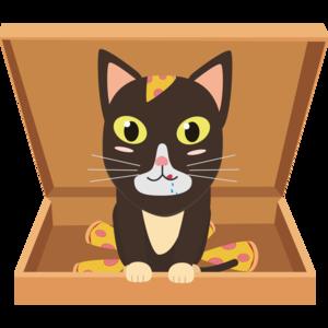 Cat In A Pizza Box
