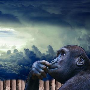Ape Monkey Zoo Style