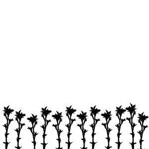 Plant Virus