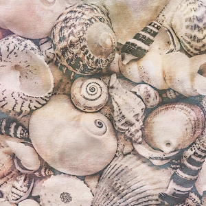 Watercolor Shell Collection