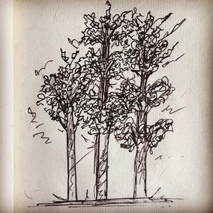 Autumn Trees Sketch
