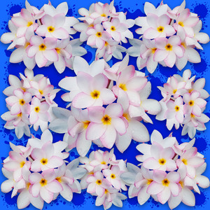 Plumerias Pink White Bouquet
