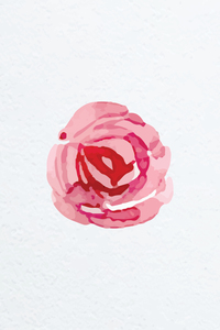 Watercolor Pink Red Rose