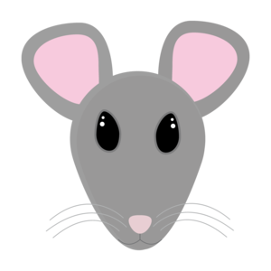 Sweet Gray Mouse Face