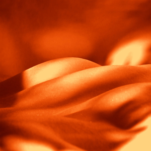Hot Curves In Orange
