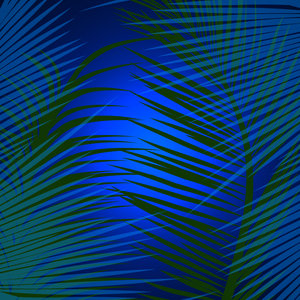 Tropical Palm In Dark