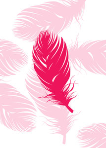 Pink Feather On White