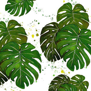 Monstera Leaves 2