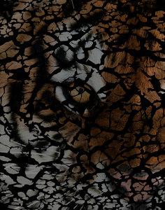 Earth Texture Tiger Shades