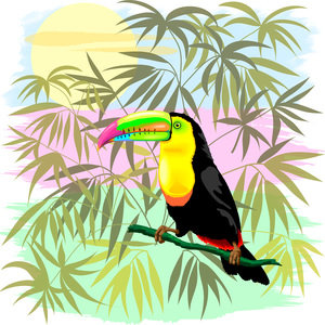 Toucan Wild Bird Amazon Rainforest